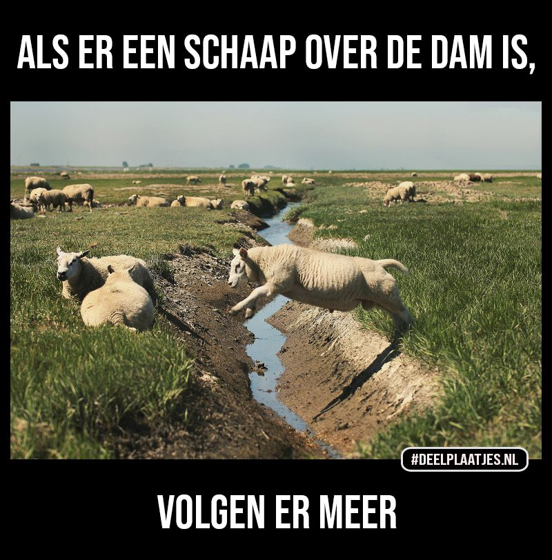 schaap over de dam