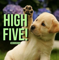 high five doggy