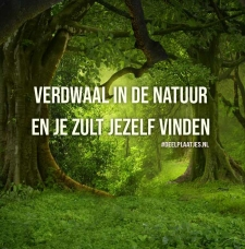 verdwaal in de natuur